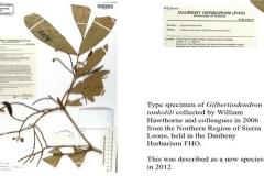 gilbertiodendron